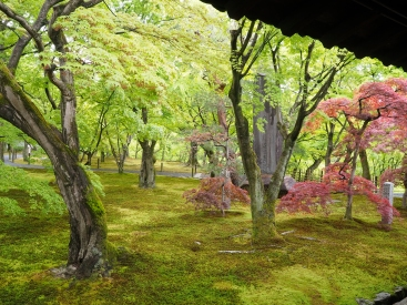 Zen temple garden: leaves and moss.